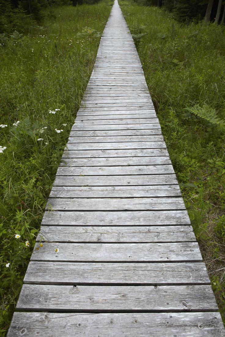 Door County Wooden Walkway