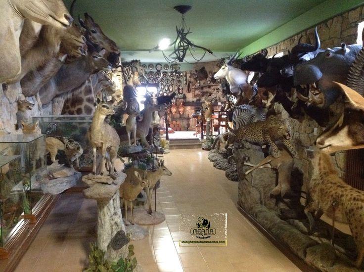 Animales disecados en venta.