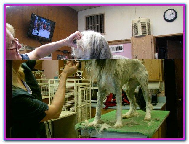 Dog Grooming School Online Free Enroll In Qc S Online Dog Grooming