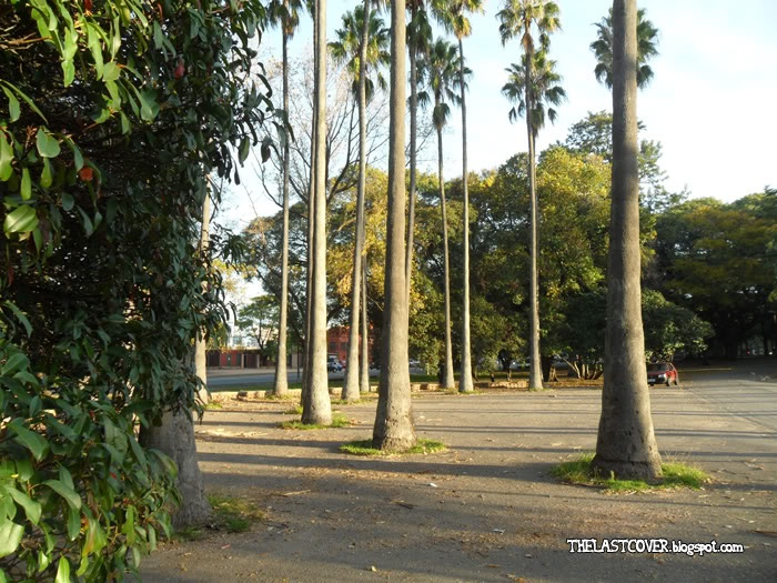 Tall palm trees (Parque Batlle, Montevideo, Uruguay)