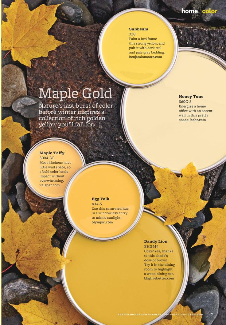 Color palette - maple golds.
