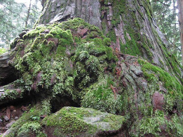 Moss - Nikko(2008)