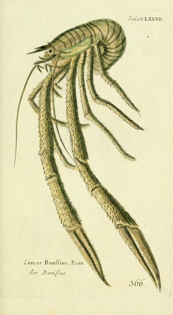 (1785) - Gemeinnüzzige Naturgeschichte des Thierreichs - Biodiversity Heritage Library #nature #fish #scientific #illustration