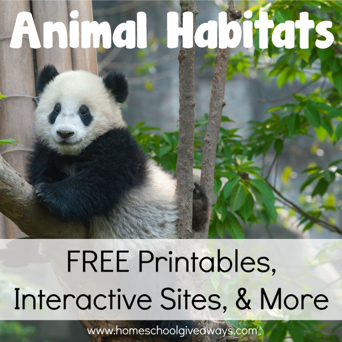 Animal Habitats: Free Printables, Interactive Sites, and More!