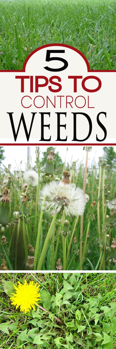 Learn how to get a handle on weeds , and have a beautiful lawn again!