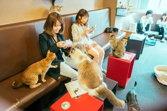 Calico Cat Café (Tokyo, Japan) Unlike other restaurants, what you'll see in the menu is a list of cats, not food. You are asked to choose from a selection of cats available in the café, and they'll be brought to you as a companion for the whole duration of your stay in the café. You are being watched by the restaurant staff to make sure that you are treating the cat nicely. You are given a bag of cat food, just so you'd get in the feline's good side…