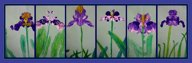 Kindergarten Irises: 1.turn paper vertical 2.fold down the center/crease, then open 3.