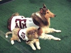Because the only thing better than one Reveille is two Reveilles!