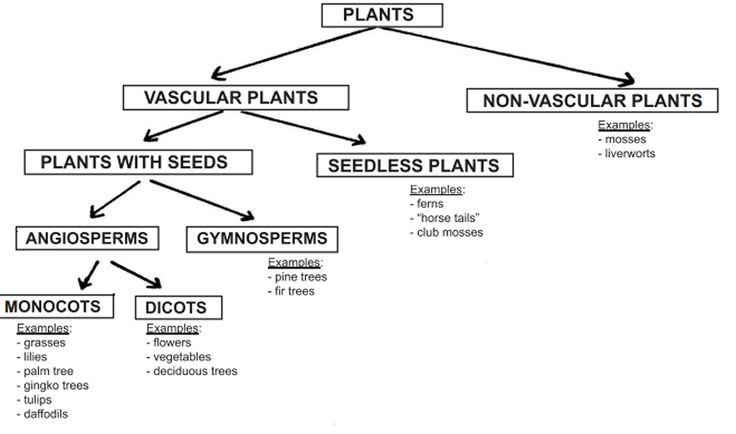 of plants vascular and non-vascular | Education | Pinterest | Plants ...