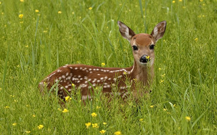 deer photo | We Love Nature And Creatures