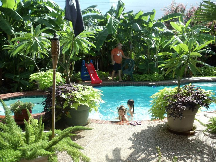 tropical backyard tropical pool tropical backyard