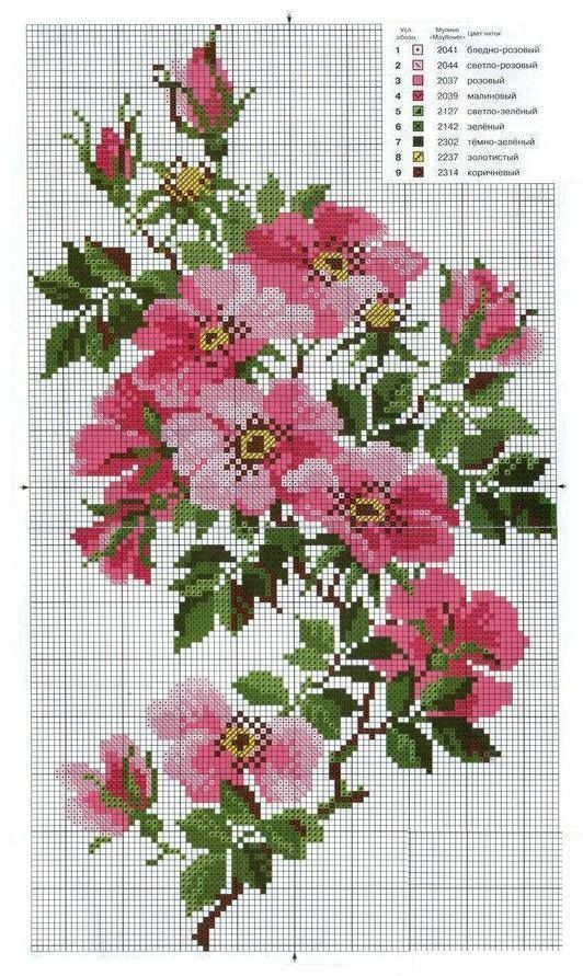 Wild roses chart