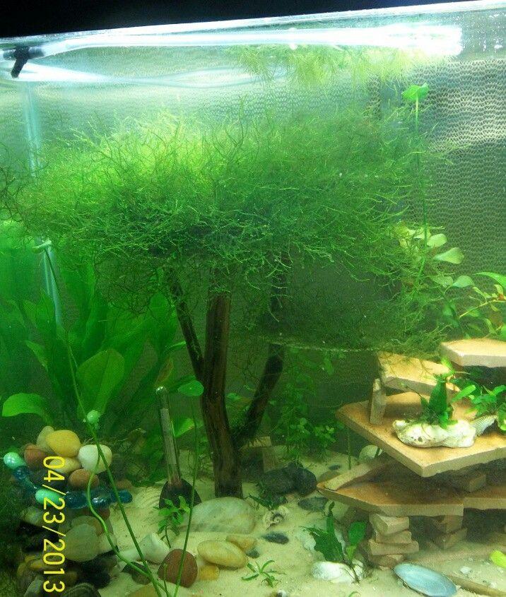 ... math Aquarium Plants/Fish etc. Pinterest Math, Trees and