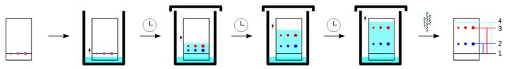 Tlc sequence - Thin-layer chromatography - Wikipedia, the free encyclopedia
