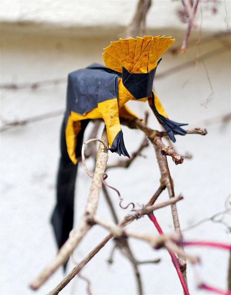 Cottontop Tamarin by Gregorigami