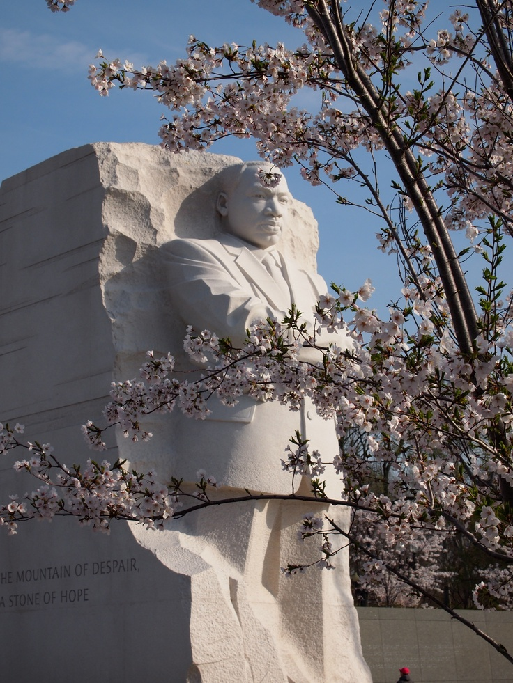 Spring Renewal   Melinda VanLone Cherry Blossoms, Tidal Basin MLK memorial