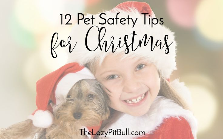 12 Pet Safety Tips For Christmas | http://www.thelazypitbull.com/12-pet-safety-tips-christmas/