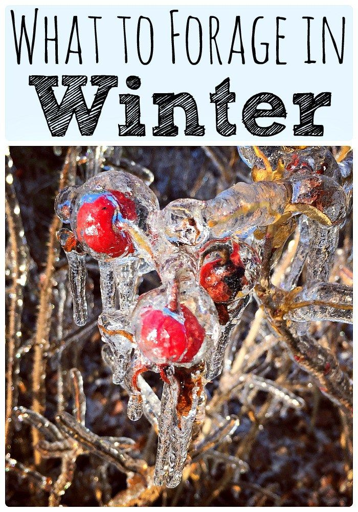 What to Forage in Winter: 30+ Edible and Medicinal Plants and Fungi