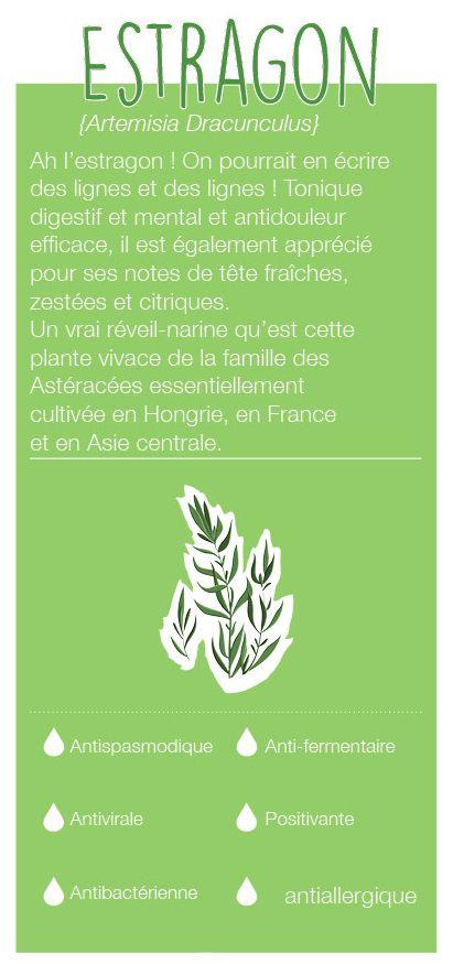 Plante vivace de la famille des Astéracées, elle est cultivée en Hongrie, en France et en Asie centrale. Son odeur a des notes de tête, une odeur fraîche, zestée et citrique. C'est un tonique digestif et mental, un antidouleur et antiallergique.