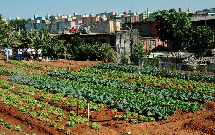 A iniciativa conta com hortas comunitárias, escolares e estufas agrícolas em diferentes comunidades.
