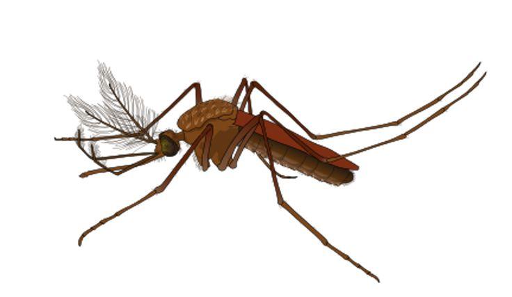 Presente en varias regiones del mundo, el mosquito tigre puede transmitir el virus Zika. A continuación, un panorama sobre el modo de transmisión del virus, los principales síntomas y las buenas medidas que hay que adoptar para protegerse. El virus...