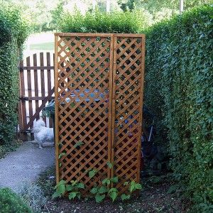 Runner bean, wheelie bin screen | Urban Dwellers