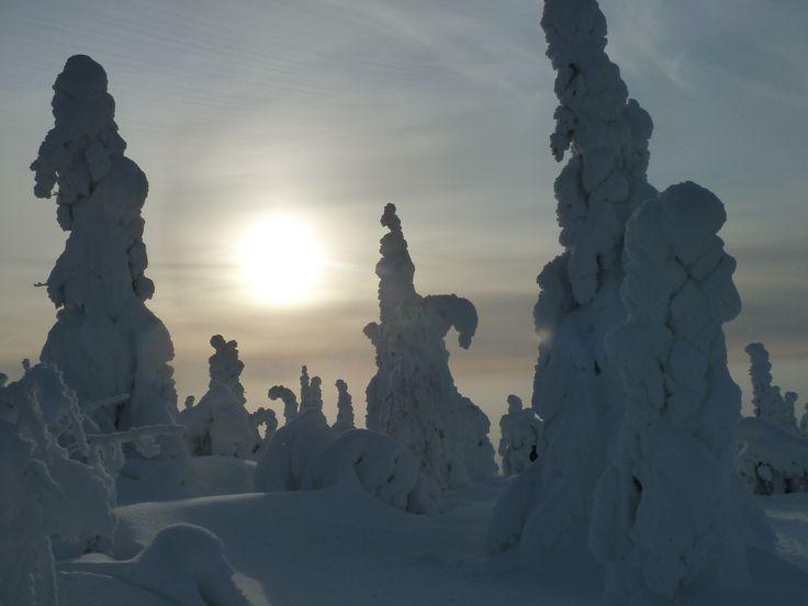 Schneebäume auf der Schneeschuhtour im Nationalpark Syöte, Taivalkoski, Lappland, Finnland