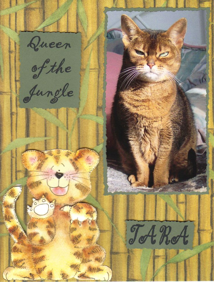 TaraQueen of the jungle Pet scrapbook, Pet scrapbook