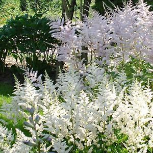 387 best beautiful white gardens images on pinterest forests an all white flower garden is the perfect retreat on a hot summer day and mightylinksfo