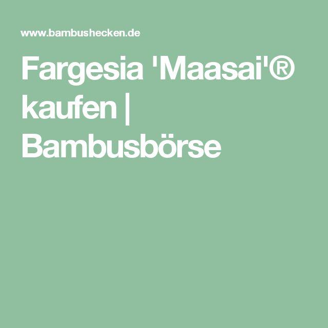 Fargesia 'Maasai'® kaufen | Bambusbörse