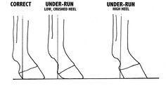 Long Toe Hind Hoof Angles - Yahoo Image Search Results