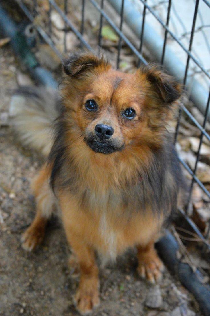 Kingston Humane Society Dogs For Adoption
