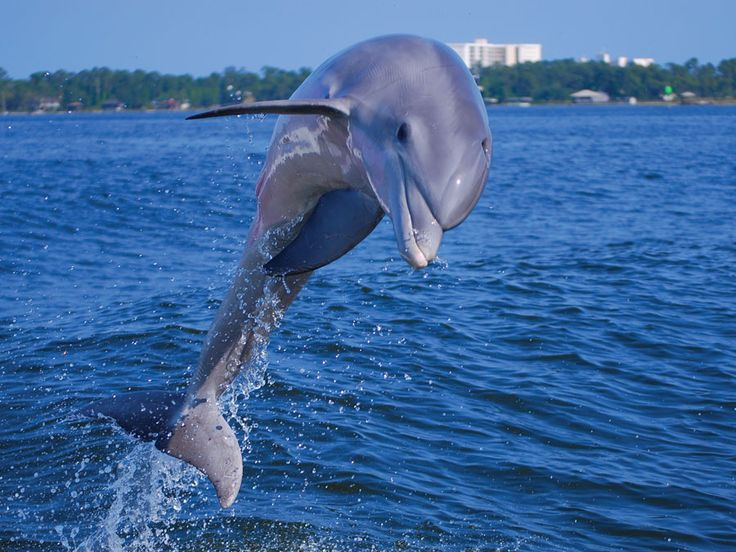 Probably the best dolphin cruise we have been on was this past summer in Orange Beach, Al.