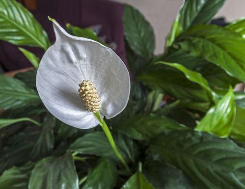 FOTO: 10 izbových rastlín, ktoré znižujú stres a znečistenie ovzdušia - Info.sk