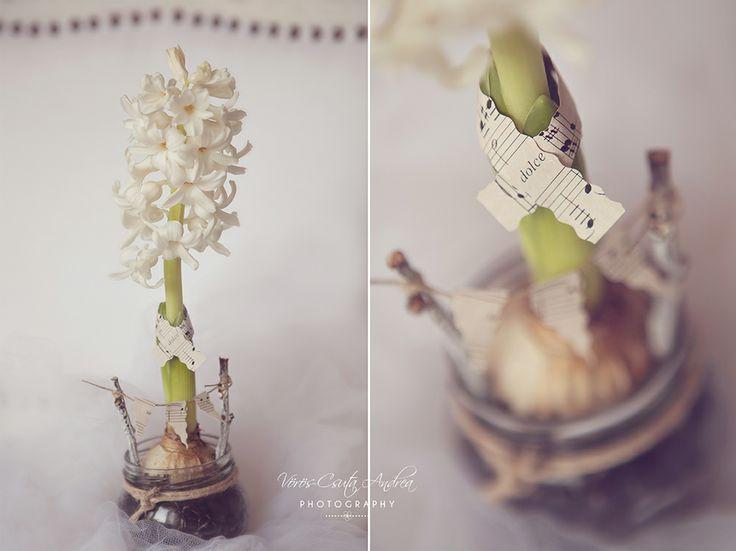 white, vintage, csutafoto, flower