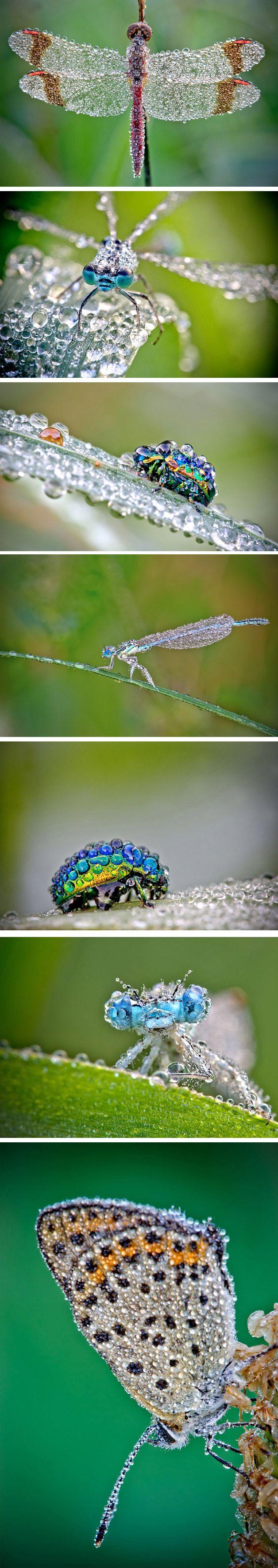 O fotógrafoDavid Chambonficou alguns meses estudando como fotografar insetos com o orvalho da manhã ou depois de uma chuva. O resultado valeu a pena tantos dias de tentativa e erro.