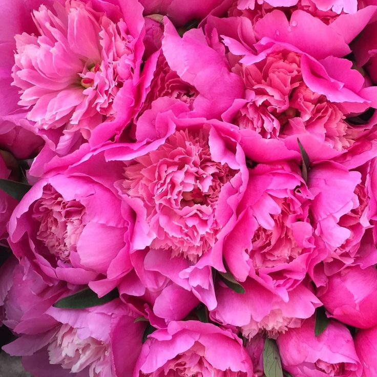 Time for some pink madness! We can never resist pink flowers.⠀ 💐⠀ #pink #sunday #flowers #colourful #foryou #roses #cabbageroses #fuscia  #flowerstagram #colourpop #smile #pretty #bitsofaustralia⠀