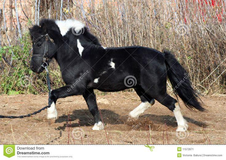 31 best <3 Ponies <3 images on Pinterest | Adorable animals ...