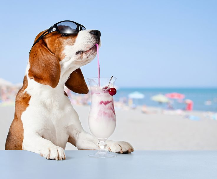 Dogs Cocktail Glasses Beagle Mixed drink, eyeglasses Animals