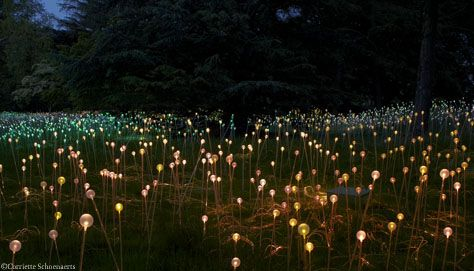 Light Nights - Events - Longwood Gardens  I would ABSOLUTELY love to see this :): Bruce Munro, Garden Ideas, Favorite Places, Lightnights10 Longwood Jpg, Light Installation, Longwood Gardens, Gardens Light