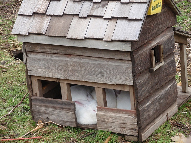 17 best images about rabbit hutches on pinterest guinea for Homemade bunny houses