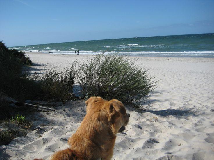 Schließe Deine Augen und träume Dich an schneeweiße Strände, pure Hundefreundlichkeit und glasklare Fluten. Für Hundefreunde und alle anderen: Die Ostseeinsel Rügen ist ein herrliches Urlaubsziel. …