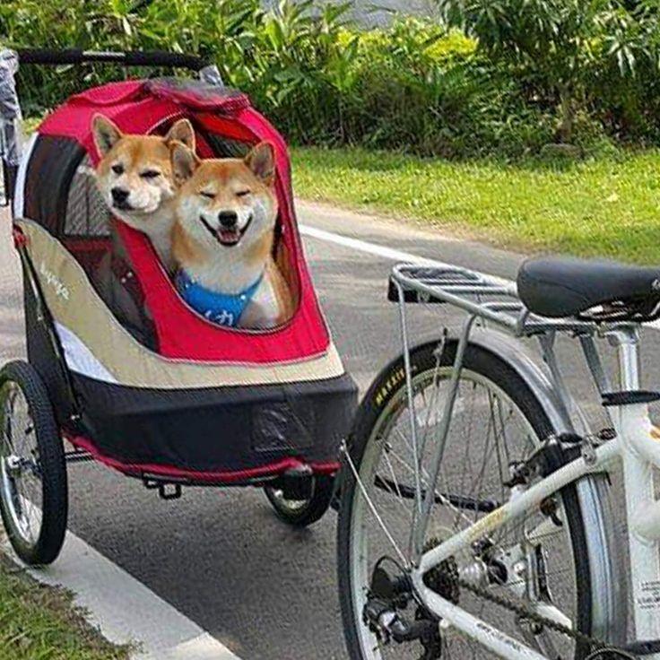 ibiyaya 2in1 Heavy Duty Dog Stroller/Pull Behind Bike