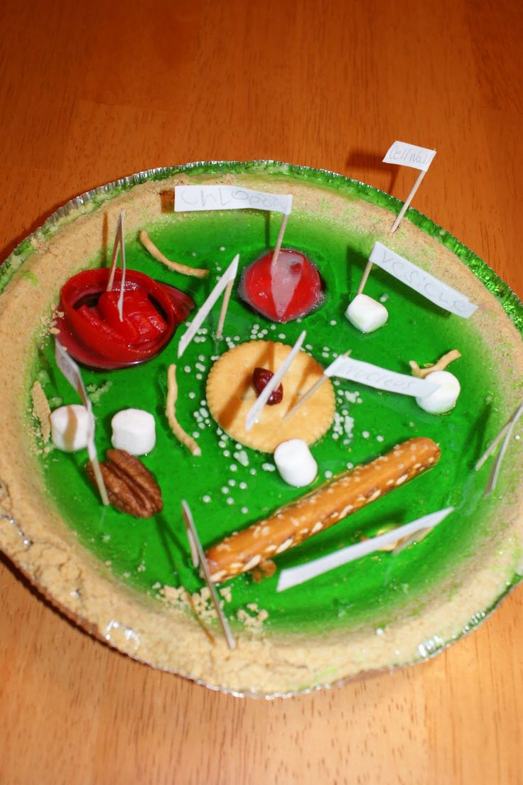 39 best plant cell model images on pinterest animal cell fair plant cell model ideas clay edible recycled and how to make it pooptronica Images
