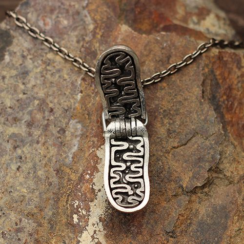 Mitochondria Necklace! This hand-cast pewter mitochondrion displays the outer membrane, inner membrane, ribosomes, DNA, and more.