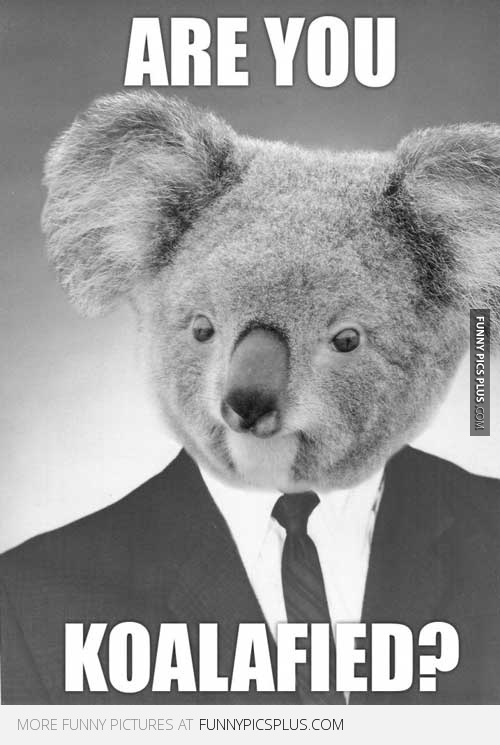 Are You Koalafied Funny Interviews Pinterest Jokes