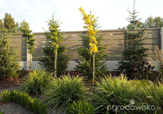 Moja codzienność - ogród Oli - strona 1051 - Forum ogrodnicze - Ogrodowisko