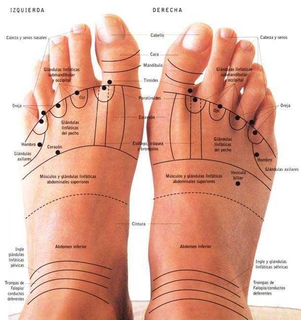 Reflexología podal pie delante. Puntos indicativos reflexologia podal de los pies.