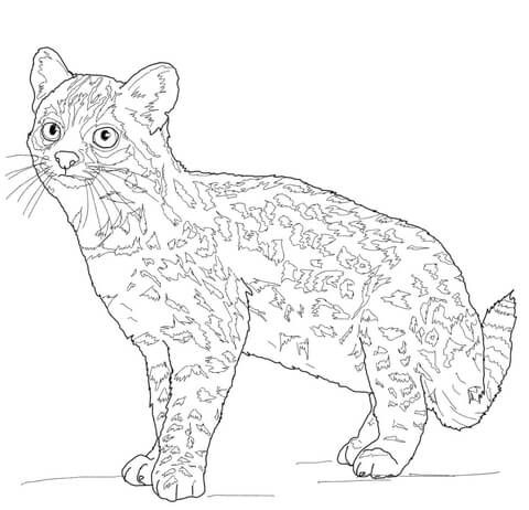 1000+ images about Just cats coloring 1 on Pinterest ...
