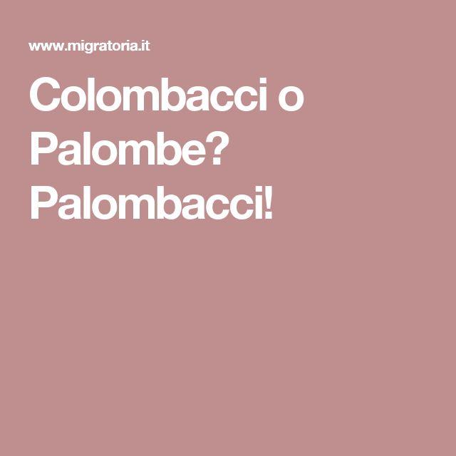 Colombacci o Palombe? Palombacci!